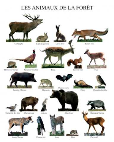tiere wald hirsch reh fuchs hase wolf poster 50x40cm. Black Bedroom Furniture Sets. Home Design Ideas