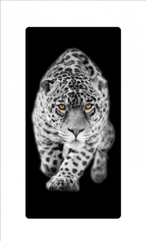 raubkatzen leopard bilder auf acrylglas online im shop von 1art1 kaufen. Black Bedroom Furniture Sets. Home Design Ideas