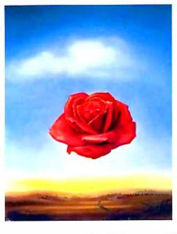 Salvador Dali - Medative Rose