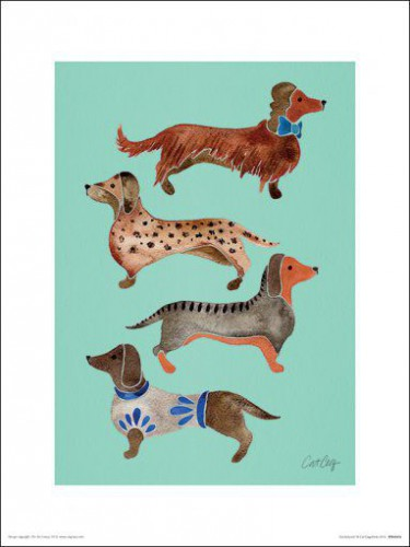 Hunde - Dachshunds, Cat Coquillette
