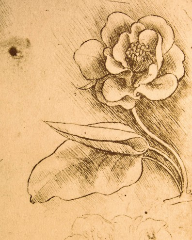 Leonardo Da Vinci Study Of Flowers Detail 1481 1483