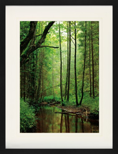 Forests - A Silent Creek Runs Through The Wood