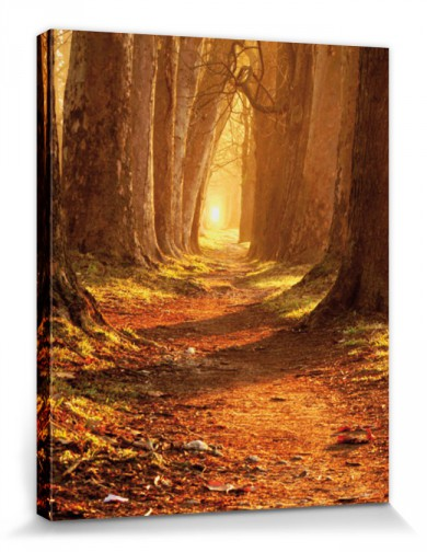 Forests - Autumn Colours, Magic Path