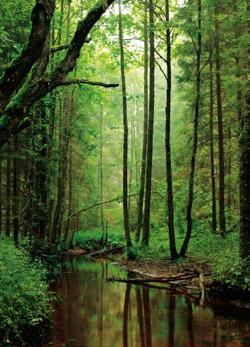 Forests - A Silent Creek Runs Through The Wood, 2 Parts