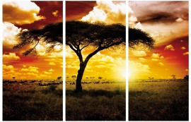 Africa - Lone Acacia, Sunset In The Savannah, 3 Parts