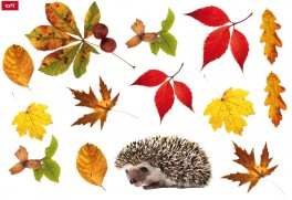 Autumn - Hedgehog And Autumn Leaves
