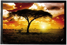Africa - Lone Acacia, Sunset In The Savannah