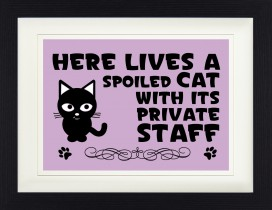 Katzen - Here Lives A Spoiled Cat With Its Private Staff