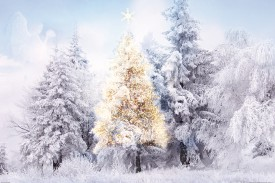 Christmas - In The Snow-Covered Forest
