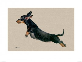 Dogs - Freddy, The Flying Sausage Dog Jane Bannon