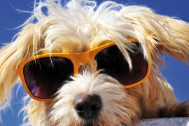 Dogs - Cool Dog