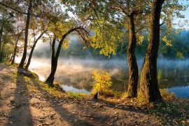 Forests - Trees By The Riverside In The Morning Haze
