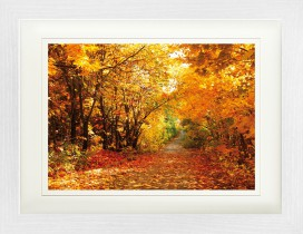 Forests - Magic Autumn Colours, Forest Path