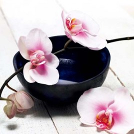 Flowers - Orchids And Bowl, De Bourgies