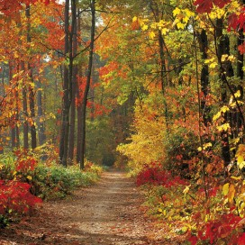 Forests - Magic Autumn Colours