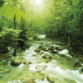 Forests - Green Magic River