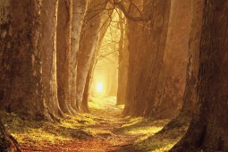 Forests - Magic Light, Forest Path In Autumn