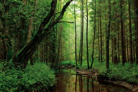 Forests - A Silent Brook Runs Through The Woods