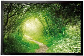 Forests - Deep Green Forest, Into The Light
