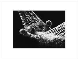 David McEnery - Cat Nap II