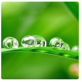 Plants - Dewdrops On A Leave