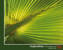 Palm Trees - Hemp Palm Leave