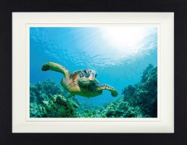 Submarine World - Sea Turtle Over Sunlit Coral Reef