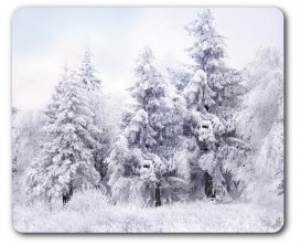 Winter - Snow-Covered Forest